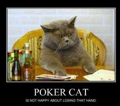 poker-cat-unhappy